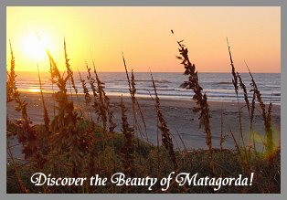 Matagorda Beach Sea Oats in the Dunes
